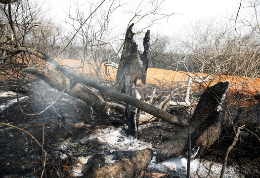 A tree trunk burns at the Guarani Nation Ecological Conservation Area Nembi Guasu in Charagua