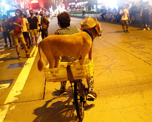 A woman and her dog are seen at Mong Kok district in Hong Kong