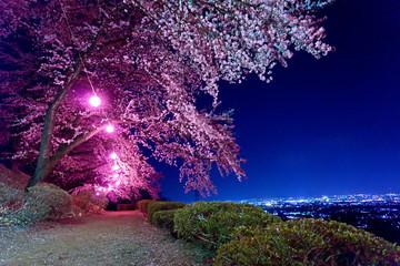 山梨 夜桜