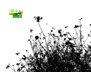 The silhouette of grass with flowers in the meadow. Vector illustration