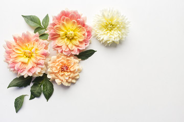 Poster de jardin Dahlia Dahlias on white wood table. Gentle romantic background. Floral background. Top view, flat lay. Flowers, spring, summer concept. Romance and love card concept. Empty space for your text.