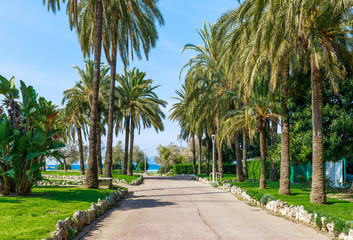 Panorama of Cannes, Cote d'Azur, France, South Europe. Nice city and luxury resort of French riviera. Famous tourist destination with nice beach and Promenade de la Croisette on Mediterranean sea Wall mural