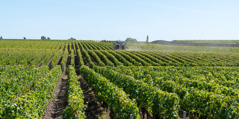 Foto auf Leinwand Weinberg Spraying of grapevine in medoc Bordeaux vineyard in france