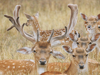 Happy deer family lying in the grass in summer