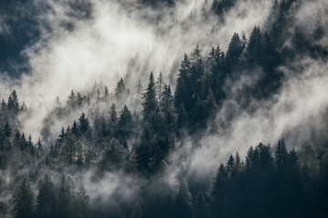 Dense morning fog in alpine landscape with fir trees and mountains.  - 288653986