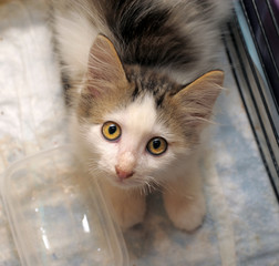 little sad kitten in a cage in a shelter