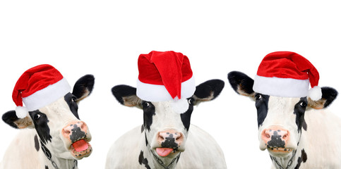 Photo sur Aluminium Vache Three funny cows in Christmas hats.