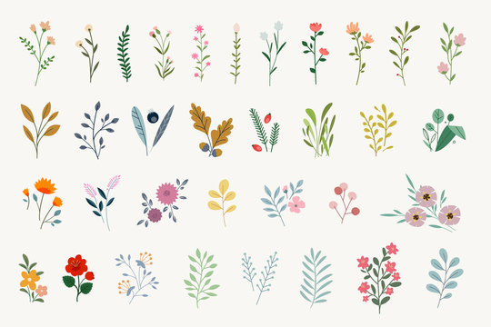 Set of floral elements for graphic and web design. Vector illustrations for beauty, fashion, natural and organic products, spa and wellness, wedding and events, environment.