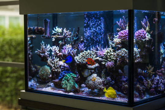 Marine fish tank in the house