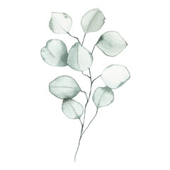 Acrylic Prints Watercolor Illustrations Watercolor eucalyptus dusty green leaf plant herb spring flora