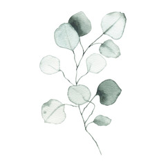 Foto op Aluminium Waterverf Illustraties Watercolor eucalyptus dusty green leaf plant herb spring flora