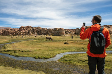 Young man with backpack at serene green landscape with alpacas and llamas, geological rock formations
