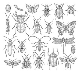 Insects sketch. Butterfly, beetle and fly, ant. Dragonfly, ladybug and bee. Vintage hand drawn engraving vector collection. Illustration insect dragonfly and beetle, butterfly and ant
