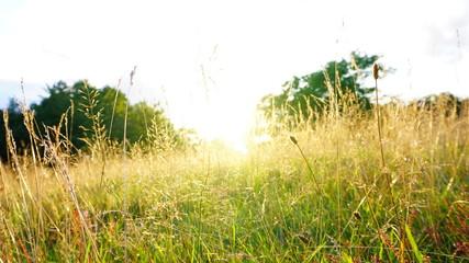 Sunny field Fotoväggar