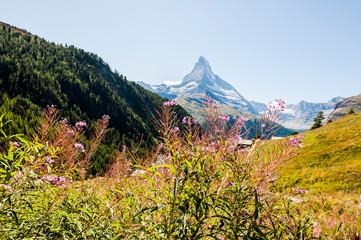 Zermatt, Findeln, Matterhorn, Sunnegga, Alpen, Wallis, Weiler, Alm, Bergwiesen, Bergblumen, Sommer, Schweiz