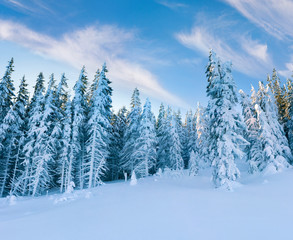 Wall Mural - Frosty winter morning in mountain forest with snow covered fir trees. Splendid outdoor scene, Happy New Year celebration concept. Artistic style post processed photo.