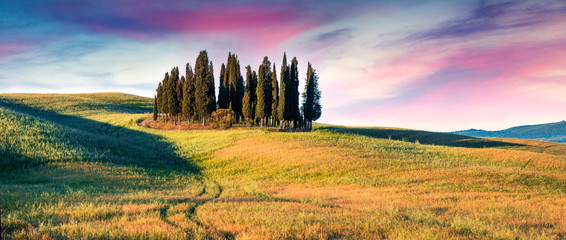 Colorful spring sunrise with small cypress forest among the field of wheat. Berautiful morning panorama of Tuscany, Italy, Europe. Beauty of nature concept background.
