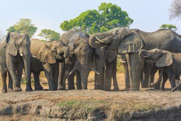 Elephants in Khaudum National Park - Namibia