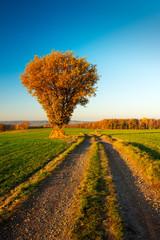 Oak Tree besides Farm Track through Fields in Autumn