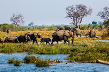 Elephants from Caprivi Strip - Bwabwata, Kwando, Mudumu National park - Namibia