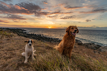 Two dogs best friends at sunset