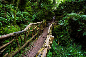 Wooden bridge in Puzzlewood, an ancient woodland near Coleford in the Royal Forest of Dean, Gloucestershire, UK