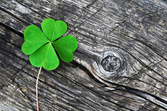 four leaf clover on old gray cracked wood
