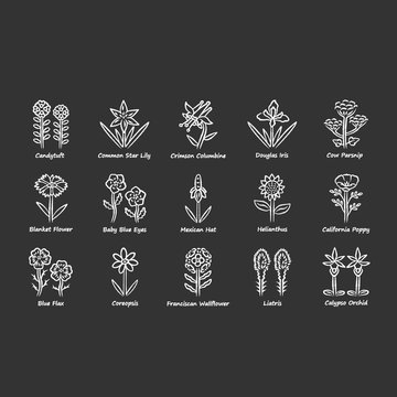 Wild flowers chalk icons set. Spring blossom. California wildflowers with names. Garden blooming plants. Botanical bundle. Meadow and field weed. Isolated vector chalkboard illustrations