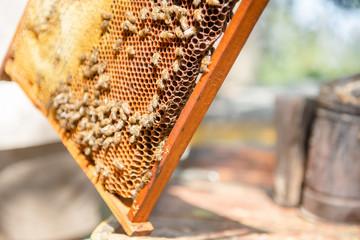 The beekeeper checks the hive