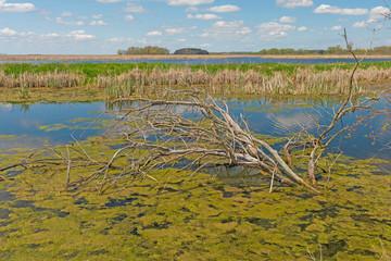 Marshland in the Spring Sun