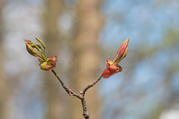 The Simple Beauty of new Life in the Spring