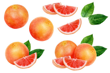 Grapefruit set watercolor isolated on white background