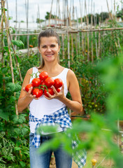 Woman farmer  with harvest of tomatoes  in sunny garden
