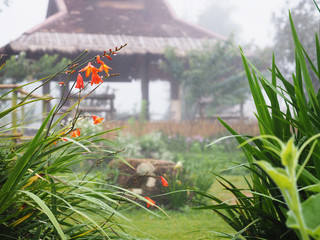 Small tropical green plant and colorful flowers field in the mist after raining