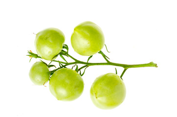 Unripe green tomatoes on branch isolated on white. Wall mural