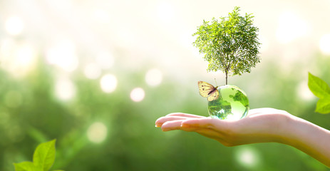 Earth crystal glass globe ball and growing tree in human hand, flying butterfly on green background. Saving environment, save clean planet, ecology concept. Card for World Earth Day.