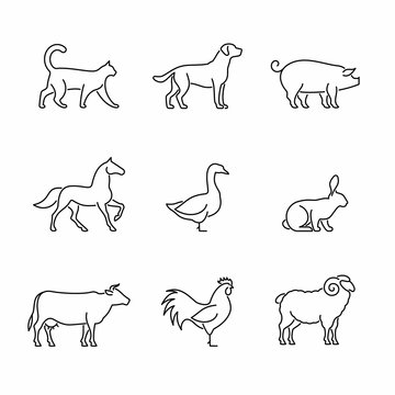 Farm animals and birds vector icons.  Pets, livestock and fowlsymbols.