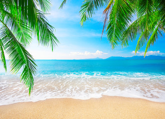 Wall Mural - tropical beach with coconut palm