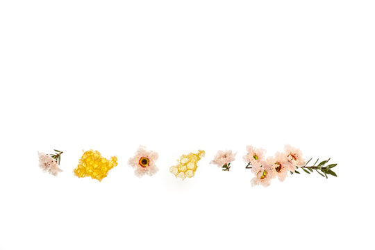 pure manuka honey with white manuka flowers and copy space above