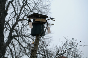 Bird feeder with bucket. Patent protecting birds against cats. Winter help for animals, feeding birds.