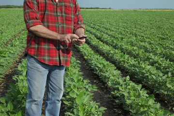 Agricultural scene, farmer in soybean field with mobile phone