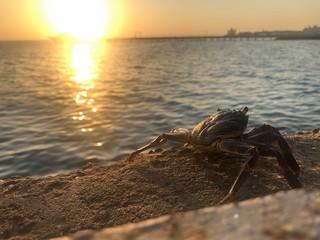 Crab on beach at sunset