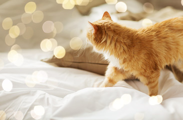 Fototapete - pets and hygge concept - red tabby cat at home in bed