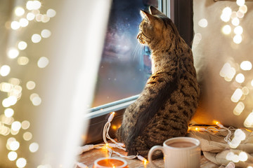 Fototapete - pets, christmas and hygge concept - tabby cat looking through window at home