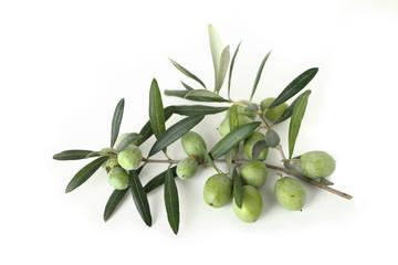 Fototapete - Olive verdi appena raccolte bio
