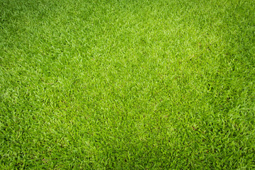 Natural green sward background and texture, Green grass field background Wall mural