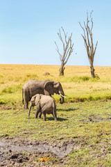 Elephants at a dehydrated water hole on the savannah