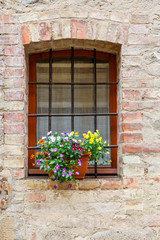 Blooming flowers at a window