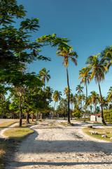 Poster Zanzibar Road between coconut palm trees