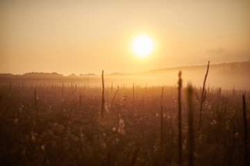 sunrise in a field with fog in summer